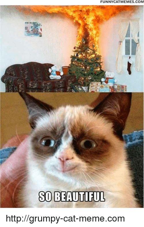 Memes 🤖 and memes FUNNY CAT MEMES SO BEAUTIFUL