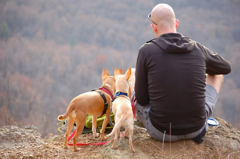 Find your next favorite walking spot with this handy guide of the top dog friendly hike and bike trails by state