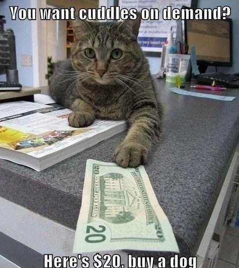cat meme 4