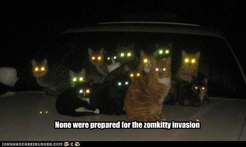 car Cats glow horde invasion kitty laser laser eyes cat cats zombie