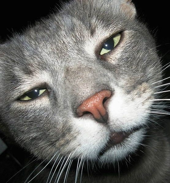 17 Cats and their facial expressions