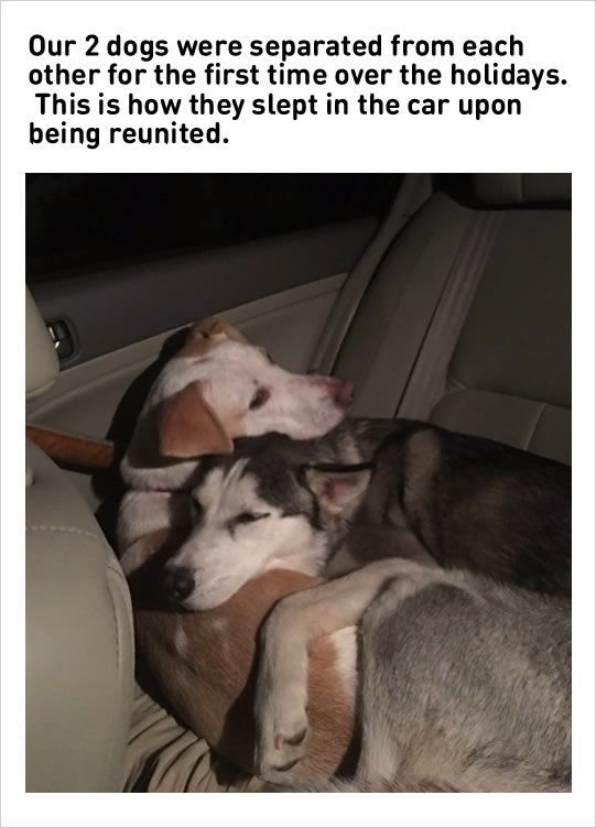 Two dogs reunion the cuteness