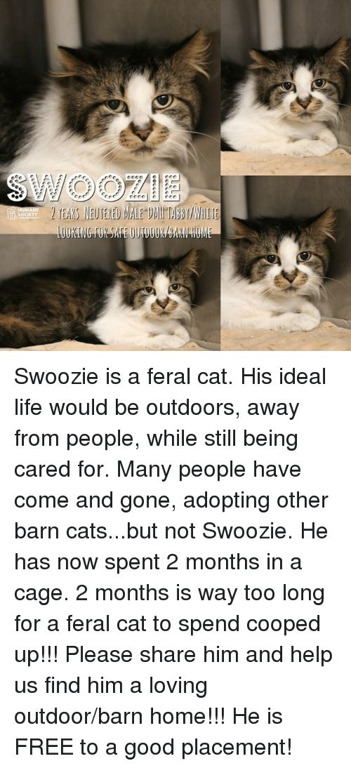 Cats Life and Memes SOCIETY Swoozie is a feral cat His ideal