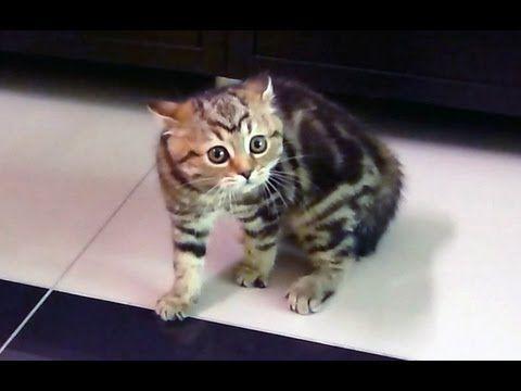 Happy Halloween Funny Kitten Dance