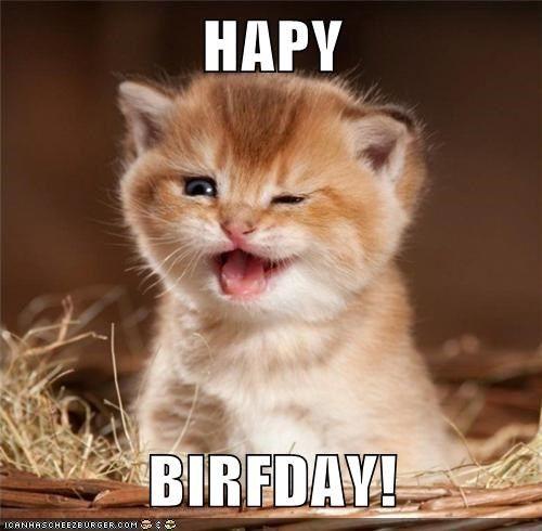 cute derp happy birthday kitty kitten
