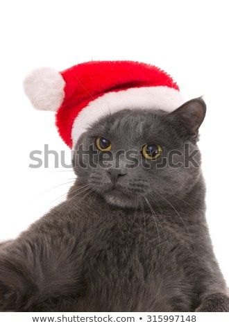 Funny Gray Cat Santa Cute Christmas Cat Christmas pet with Santa Claus hat