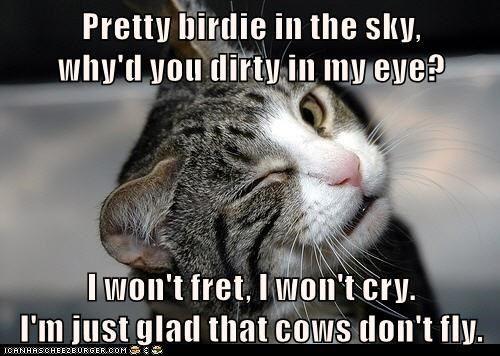 cat fret cry bir sky eye caption dirty pretty glad cows