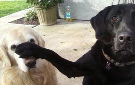 Featured image for dogs photos with humorous captions number 5
