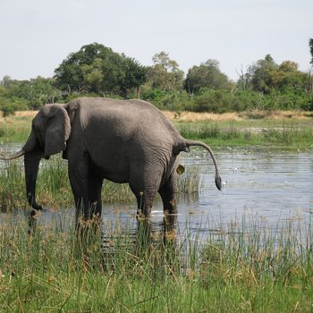Identifying animal dung makes a safari more fun