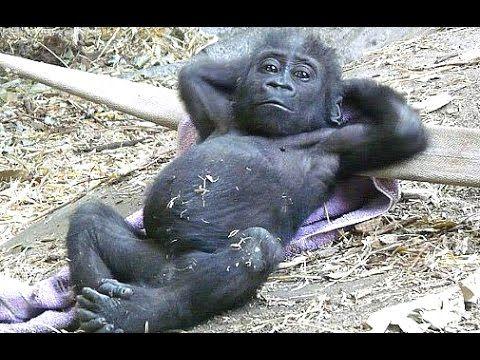 Funny Monkey Videos A Funny Monkeys pilation 2015