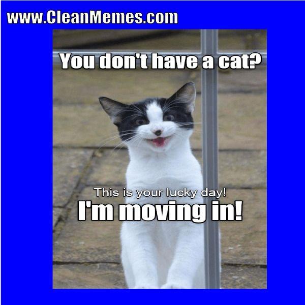 funny cat memes clean 2018