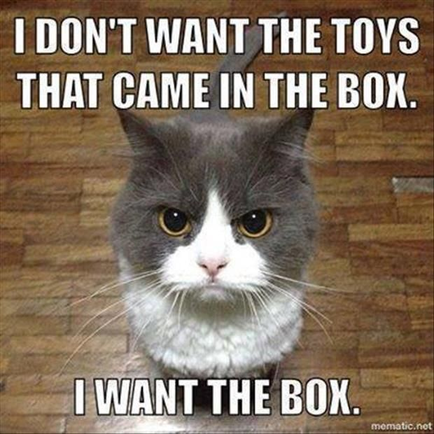 Top 30 Funny Cat Memes Funny humor