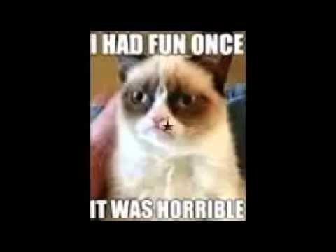 Vegan Animal My Slideshow grumpy cat meme funny cute sad veg pride good morning