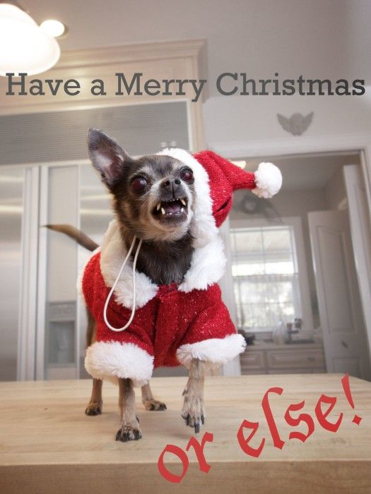 Funny Christmas Cards with Animals 2