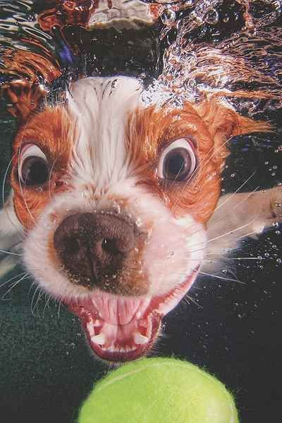 Underwater Puppies By Seth Casteel Urban Outfitters Cuteness Overload Pinterest