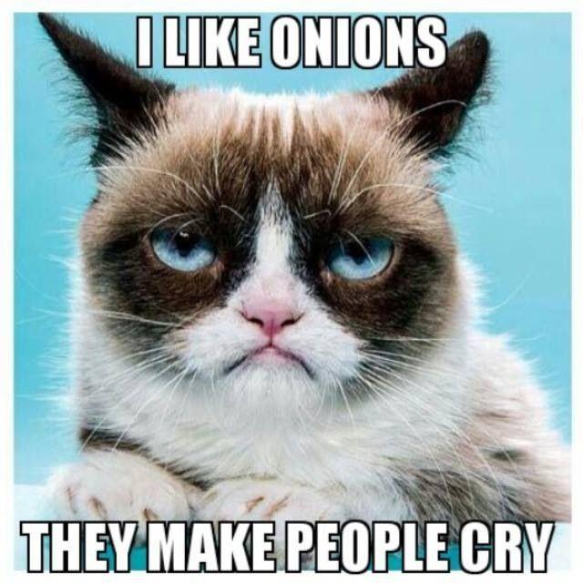 Top 40 Funny Grumpy cat