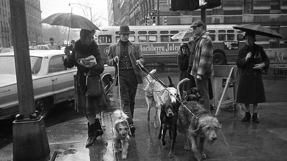 Jim Buck NYC s first professional dog walker