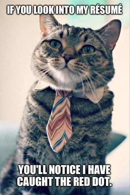 College cat is looking for a job… funny shit