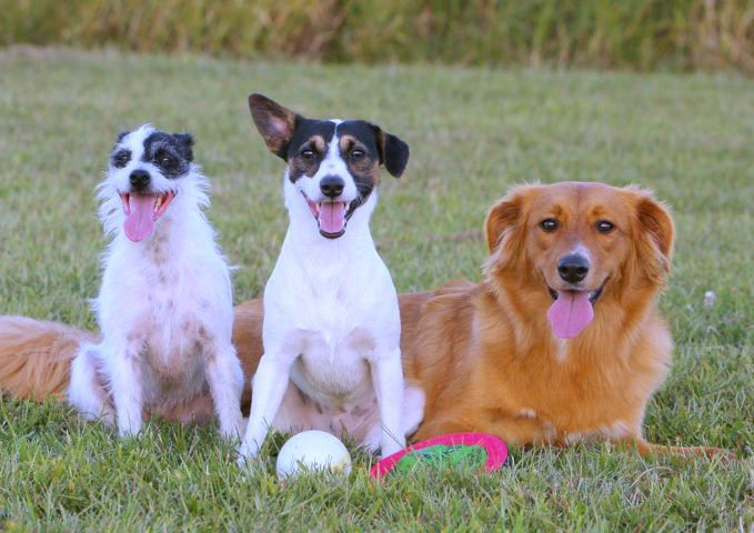 Mixed breed dogs are the best Wondering what to call your hybrid dog that s mixed