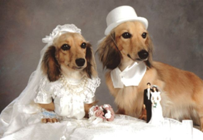 dog wedding1 1