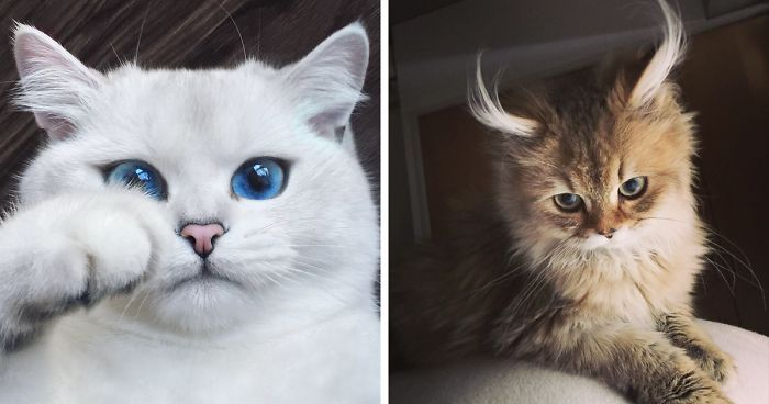 29 The Most Beautiful Cats In The World