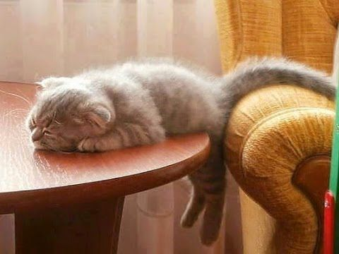 Epic Cute and Funny Cats – Super Funny Cats