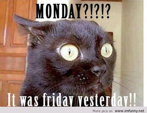 Have a great Monday everyone Funny Monday Monday Monday Monday Sayings