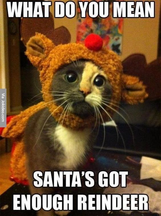 See the Wonderful Funny Cat Holiday Pictures