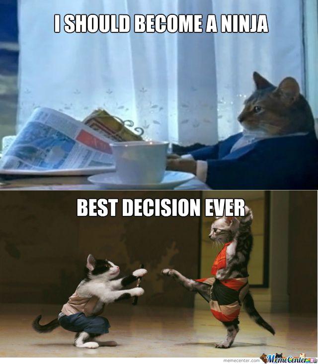Ninja Cats Funny Cat Memes With of Cute Kitties