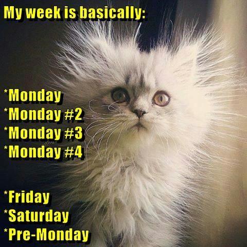 animals monday thru friday static mondays caption Cats funny