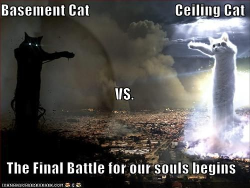 funny cat pictures ceiling cat vs basement cat let the battle for your souls begin