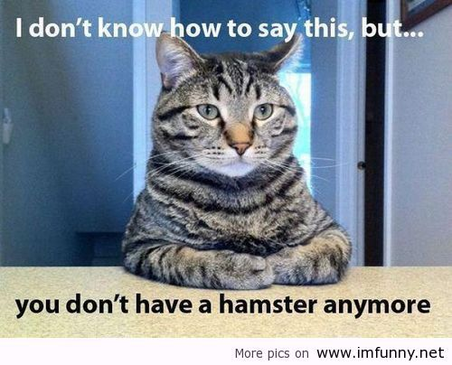 Tagged cat and hamster