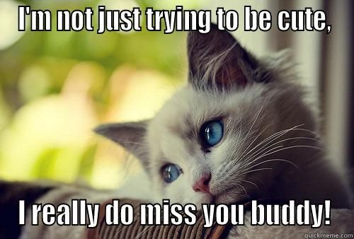 Missing Cat I M NOT JUST TRYING TO BE CUTE I REALLY DO