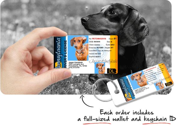 Help us support a great cause while having fun designing your Pet Driver s License