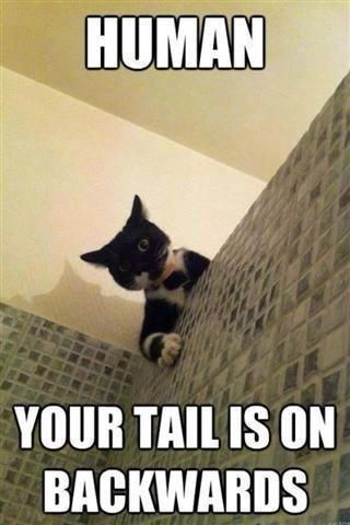"Gives new meaning to a tail between his legs As a fan mented ""Peeping Tomcat """