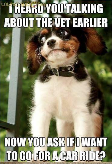 Suspicious Dog Suspicious Dog Funny Animal Quotes