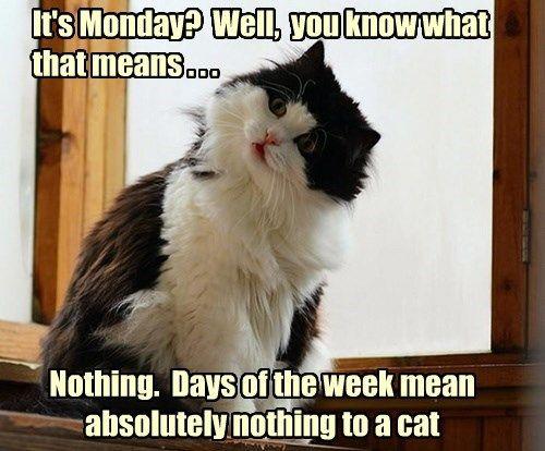 captions Cats funny monday
