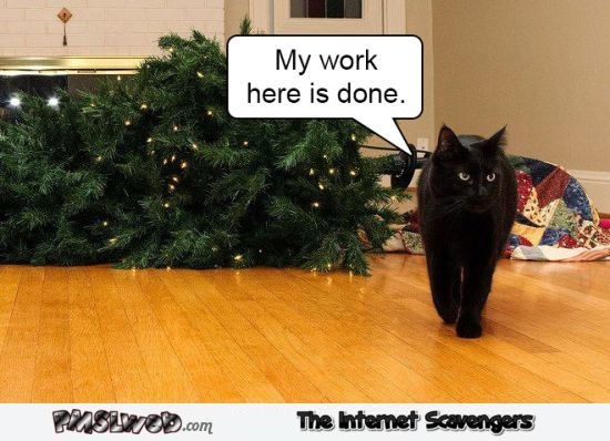 My work here is done funny Christmas tree cat meme