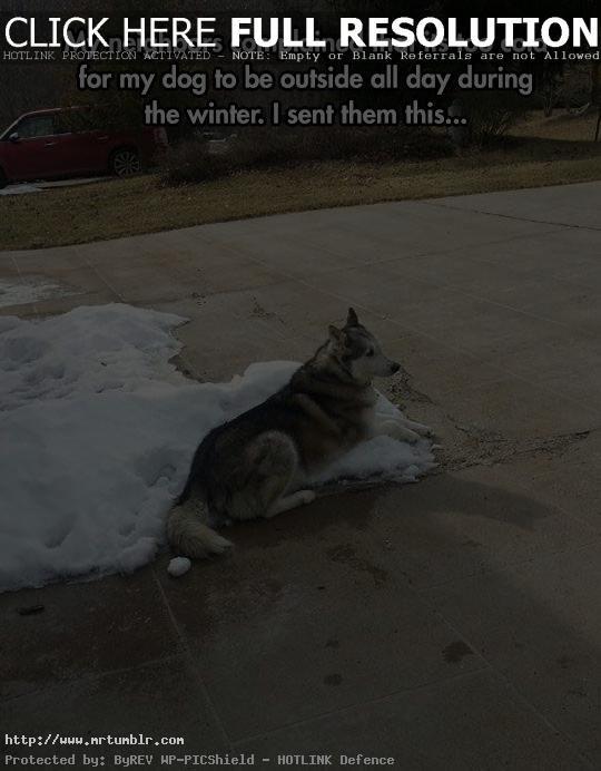 funny winter animal meme 5 Mr Tumblr