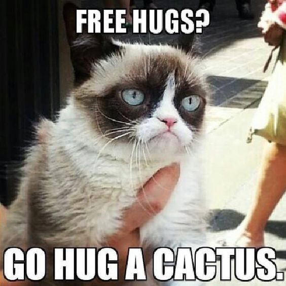Cat meme of Grumpy Cat about free hugs and a cactus