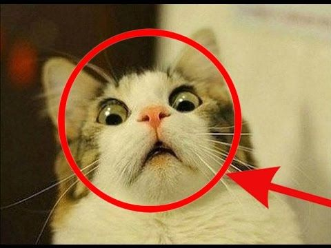 Take the Awesome Pictures Of Funny Cat Videos
