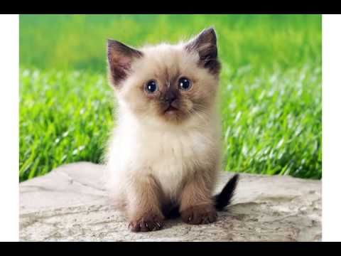 Super cute little kitty Cat wishes you a FUNNY & GREAT Happy Birthday