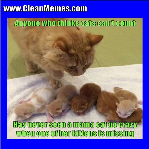 Author cleanmemesPosted on May 30 2017 Format ImageCategories Cat Memes Clean Funny Clean MemesTags Cat Memes Clean Funny