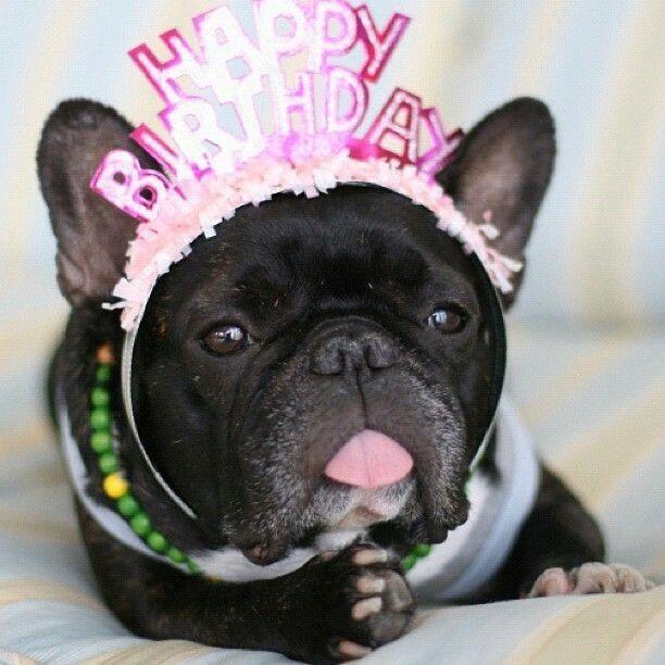 Google Https S Media Cache Ak0 Pinimg 736x 23 04 0d Happy Birthday Dog Pics