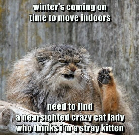 nearsighted cat crazy cat lady time indoors kitten find winter caption stray ing