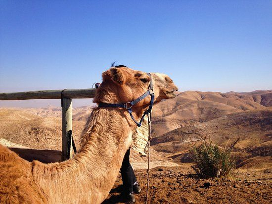 Take the Beautiful Funny Desert Animal Pictures