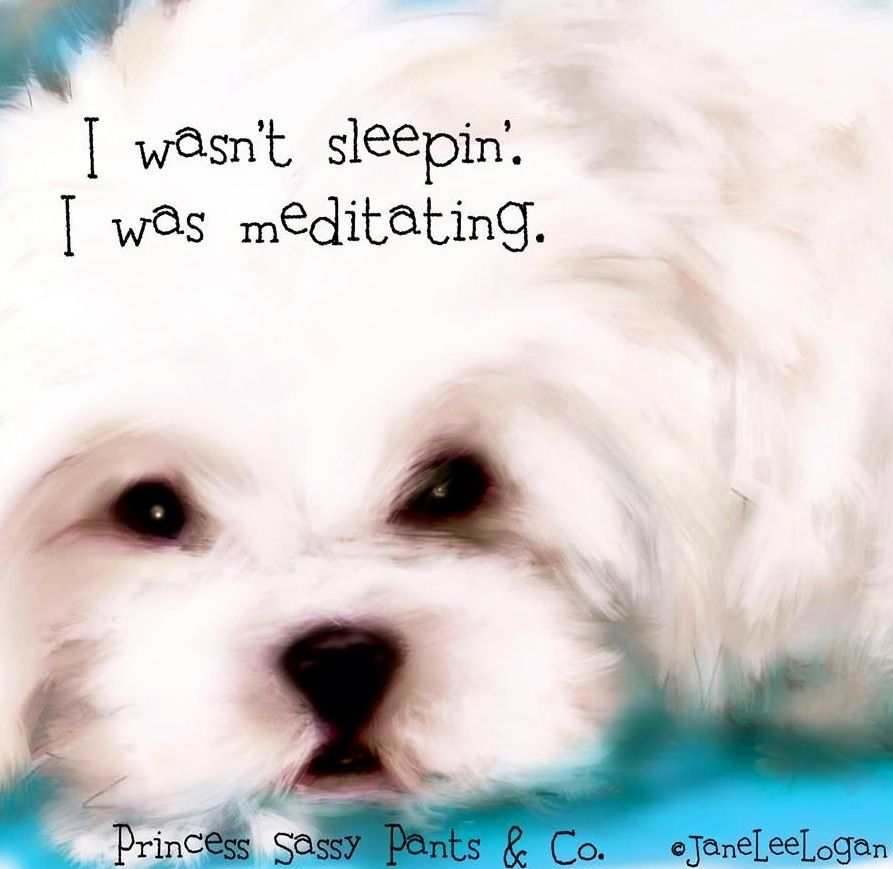 Sleeping dog quote via PrincessSassyPantsCo