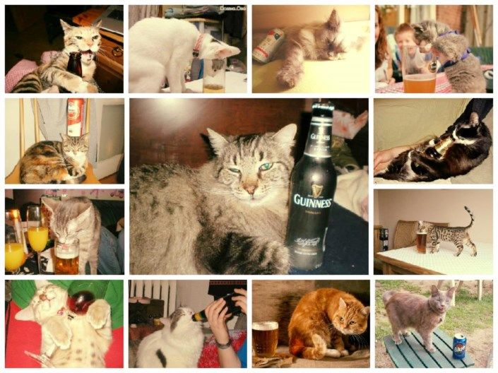 Take the Beautiful Funny Drunk Cat Pictures