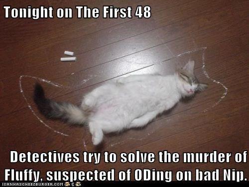 cat catnip Cats chalk outline dead ded s killed cat murder murdered nip OD outline television