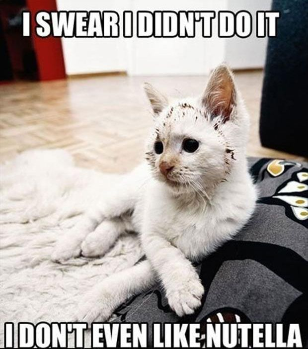 Funny Cat with Captions 49